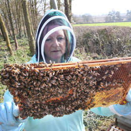 Somerset Beekeepers brace themselves for Asian hornets
