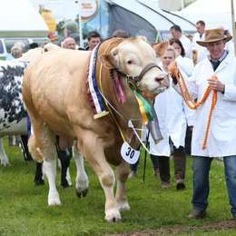 Devon Life previews the Devon County Show