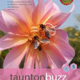 Out now -  latest honeybee news!