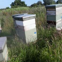A Beekeeping Tale of Woe